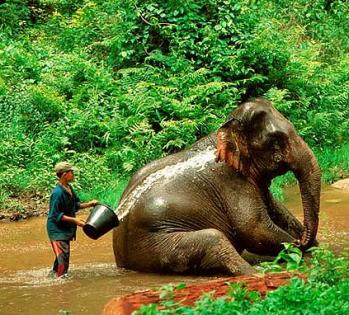 Jan 27-Feb 4: Thailand