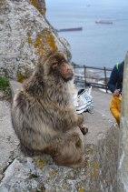 munching Doritos, Gibraltar