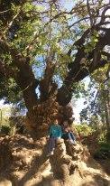 tree, Sevilla