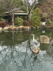 in Maruyama Park, Kyoto