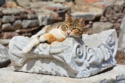 cat resting in Ephesus, Turkey