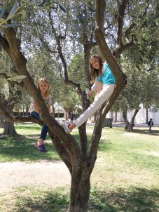 up a tree in Nice