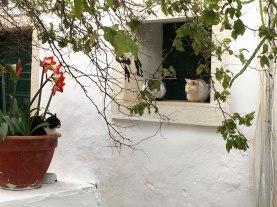 monastery in Corfu, Greece