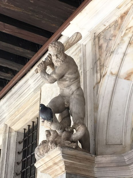 Watch out, pigeon! (Venice)