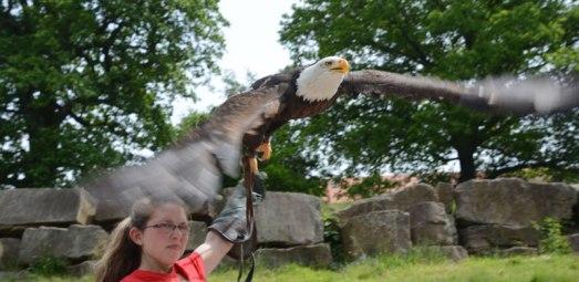 birds of prey show, Sababurg