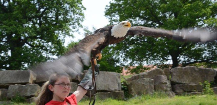 birds of prey show, Sababurg
