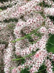 flowers, Kassel