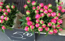 tulips, of course