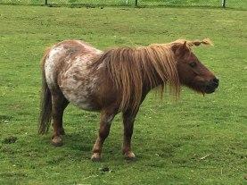 unicorn, near Zaanse Schans
