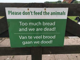 regarding ducks and sheep, Zaanse Schans