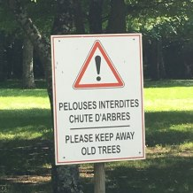 no old trees allowed