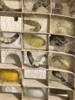 silk worms at la Magnanerie, Loire Valley