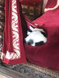 cat sleeping in Renaissance bed in Leonardo's bedroom, Clos Lucé
