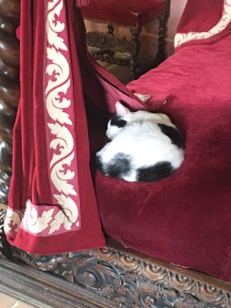 cat sleeping in Renaissance bed in Leonardo's bedroom, Clos Lucé