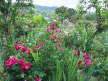 Monet's garden, Giverny