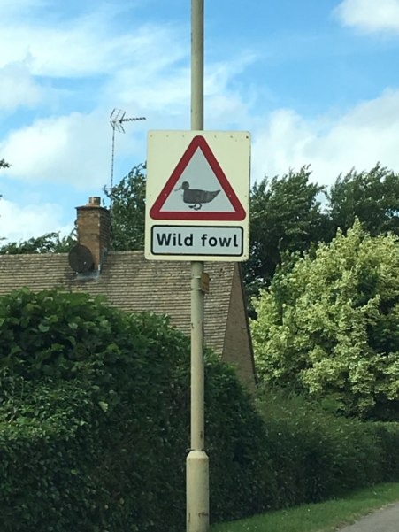 driving through the Cotswolds