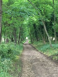 beautiful walk, Cotswolds